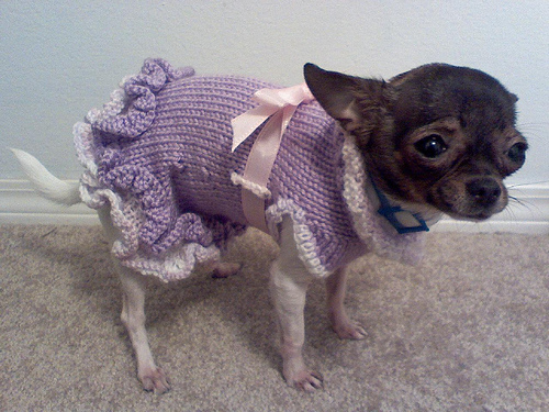 Free Knitting Patterns For Dog Coats : Christmas Sweaters for your Dog or Cat   knit and crochet ...