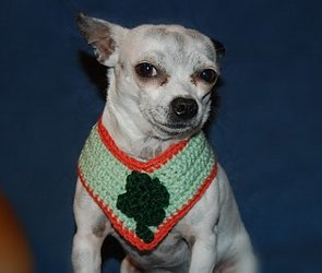 shamrock-dog-collar