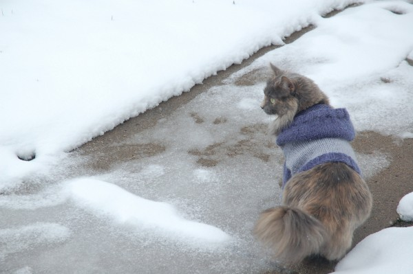 Knit A Sweater For Your Cat Free Patterns Grandmothers Pattern