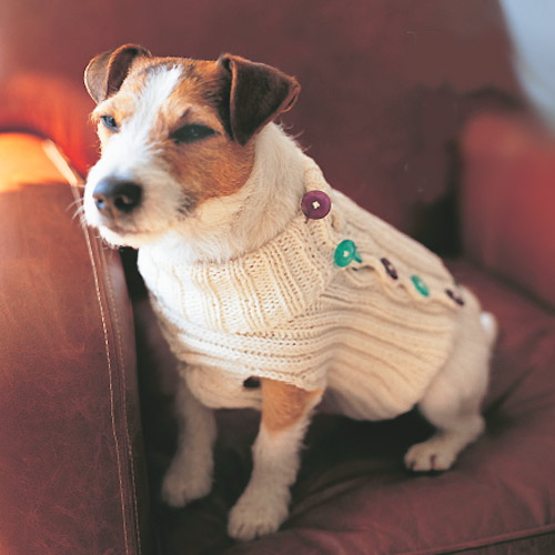 Knitting Patterns For A Dog : The Best Sweaters and Coats to Knit for your Dog   free patterns   Grandmothe...