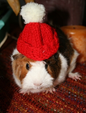 Guinea pig crochet patterns