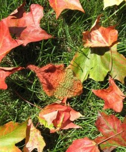 Photo_1_Leaves_on_grass_1_lg