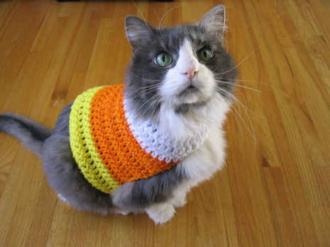 Free Patterns - Everything for Dogs - Coats & Accessories