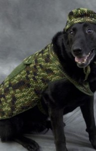 Dressing Up Your Dog Or Cat For Halloween Free