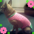 thumb_5808_53196_SpringtimeWatermelonsweaterfordog_5
