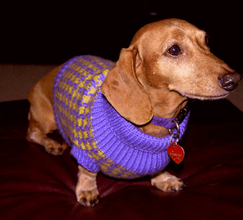 Knit a New Spring Sweater for Your Dog   free patterns ...