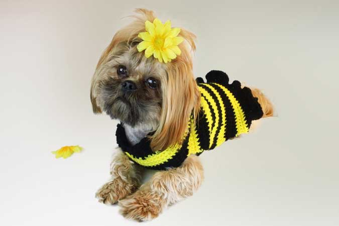 Crochet a Spring Sweater for Your Dog ? free patterns ...