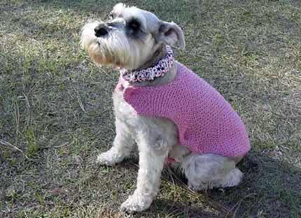 Knit a new spring sweater for your dog free patterns - Knitting for dogs sweaters ...