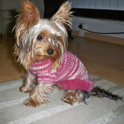 Knit A New Spring Sweater For Your Dog Free Patterns