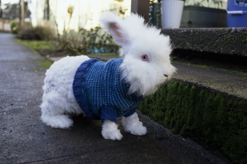Rabbit Sweater Knitting Pattern : Knit or crochet sweaters and hats for other pets free