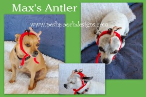 Max- Antlers