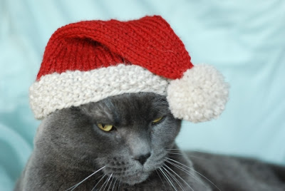 Cats love hats free patterns to knit and crochet grandmother 39 s pattern book christmas in july - Free cat hat knitting pattern ...