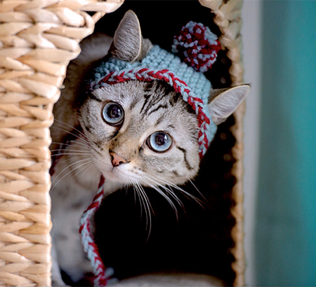Free Knitted Hats For Cats Patterns