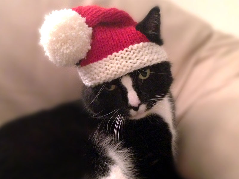 Knit a Christmas Sweater, Hat, Collar or Scarf for Your Dog (or Cat ...